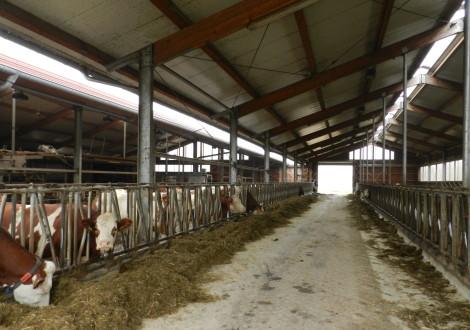 FABRINO High Grade Faser Bewehrung Milchvielstall4