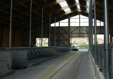 High Grade Milchviehstall mit Futtertisch beschichtet  (1)